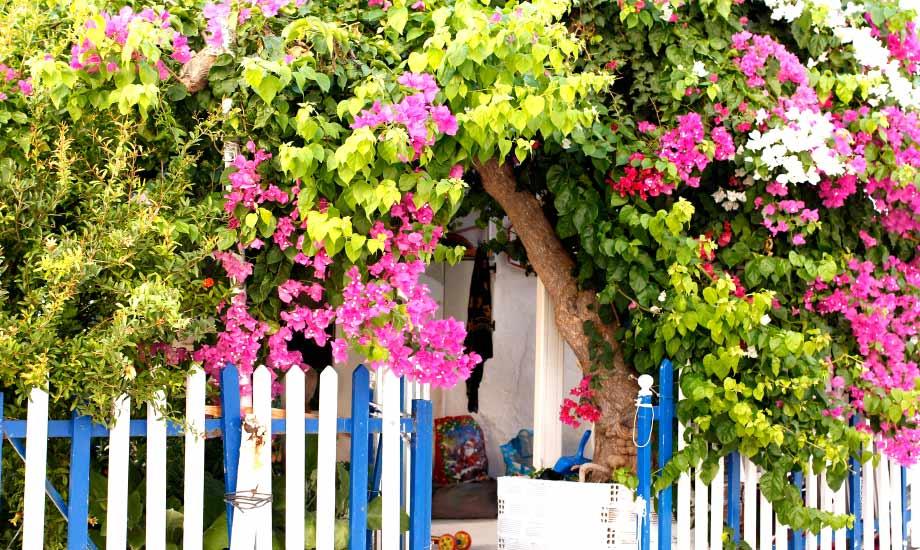 Perfekt hus og inngang